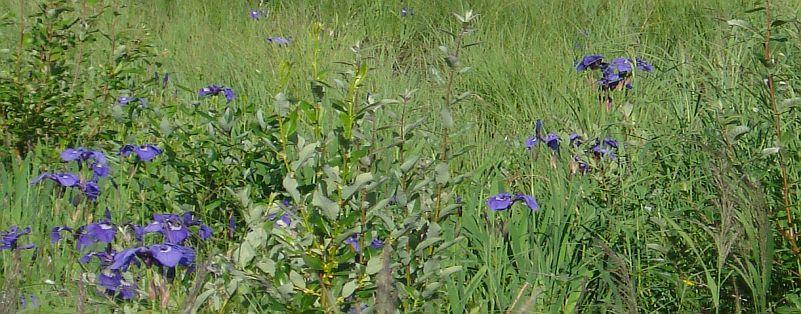 Enjoy the Alaskan wildflowers
